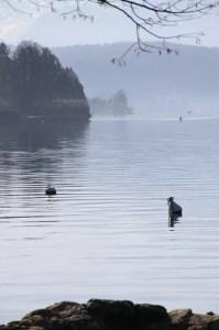 Ambiance matinale sur les rives du lac d'Annecy