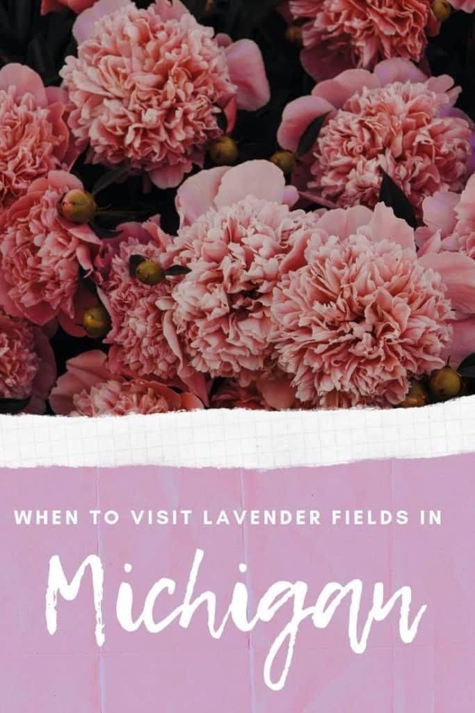 lavender farm in northern Michigan