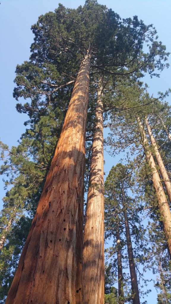 mariposa grove national park