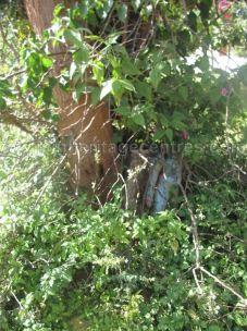 jain_ruins_of_kumarabeedu_mysore_district_karnataka_20131216_1285344011