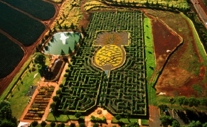 Maze in Hawaii