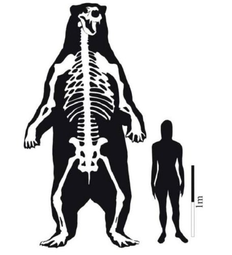 South American Giant Short Faced Bear