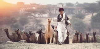 Pushkar Fair 2017