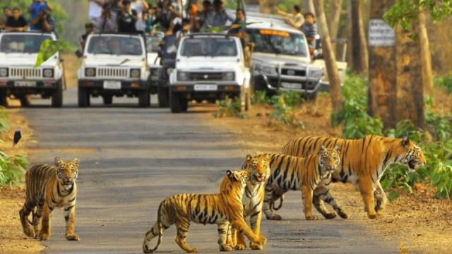 Sariska Wildlife