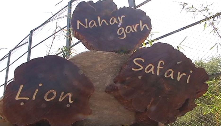 nahargarh lion safari