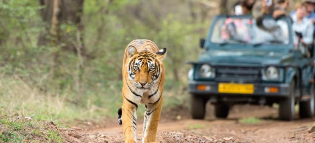 place to visit in Ranthambore