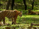 Sariska National Park Safari