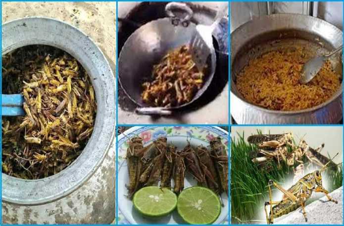Tiddi Recipe-Tiddi Biryani-Tiddi Kadhai-Tiddi Fry