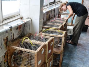 Cats waiting to be health checked, vaccinated and then sterilized.
