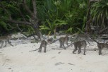 The monkeys getting familiar with the area.