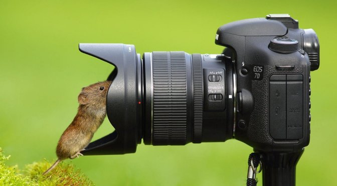 camera_mouse_animal_1680x1050