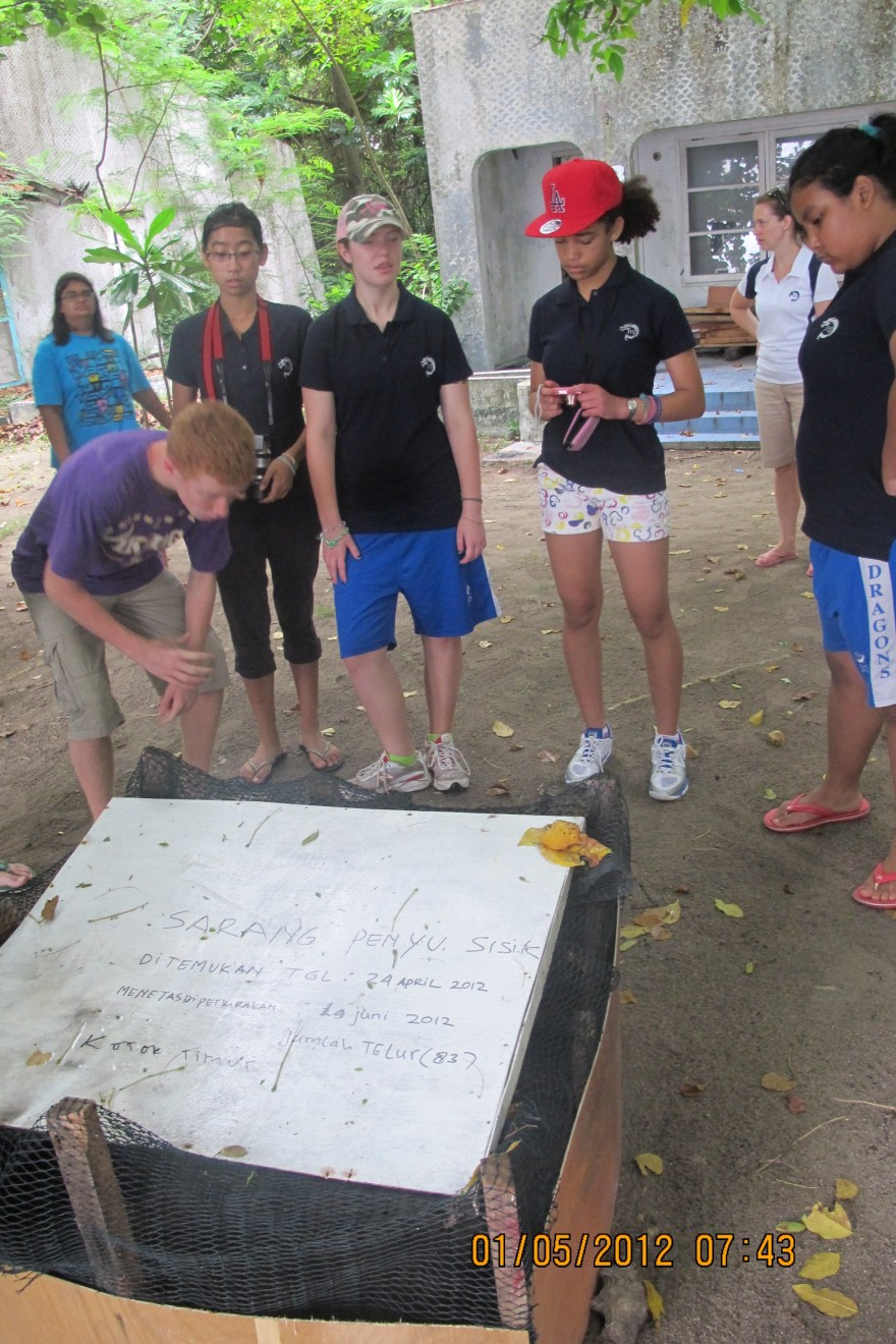 School kids learning about our Sea Turtle Protection Program.
