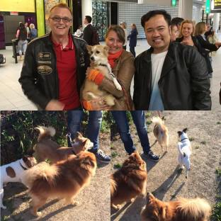 Oliva found her forever home in Holland & arrived safely! She is so happy with her new owners & Brothers! Thank you so much Eko & Richard. Thank you to Loes for taking Oliva!