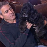George Clooney with his rescue Einstein.