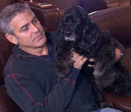 George Clooney with his rescue Einstein.
