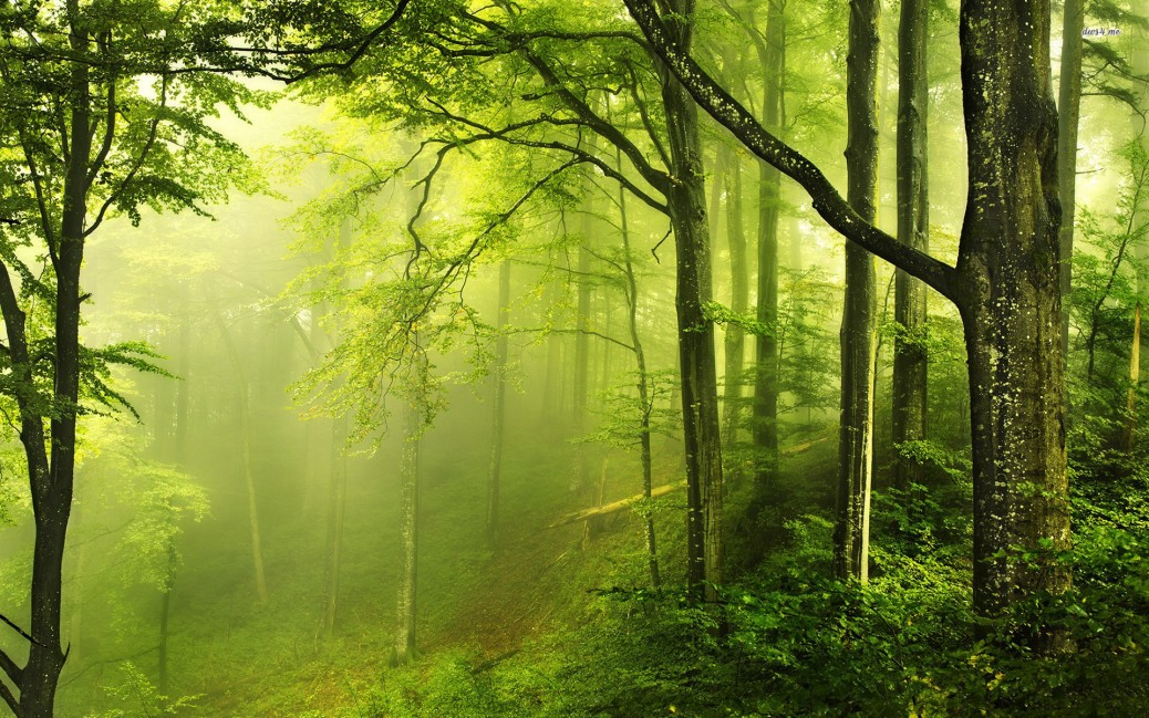 Beautiful-Green-Forest-Nature-Wallpaper-Desktop