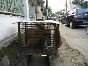 A usual situation that we see Monkeys that are being kept as pets, sometimes worse.