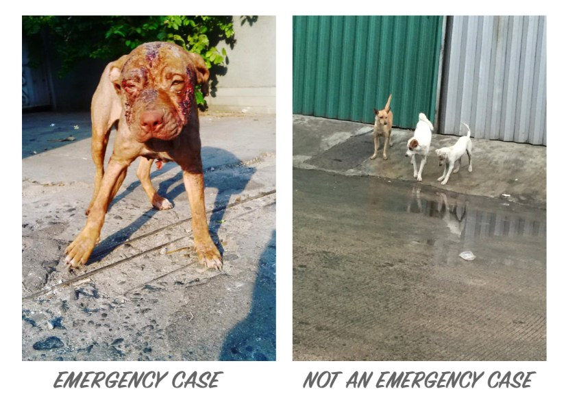 dog Example