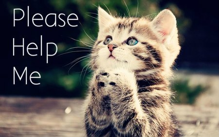 please-help-cat