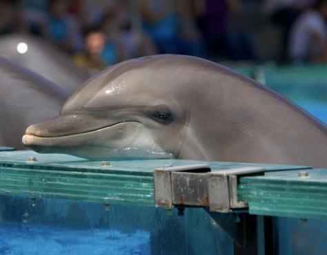 sad-captive-dolphin