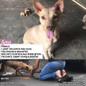 Adopt Tyra
