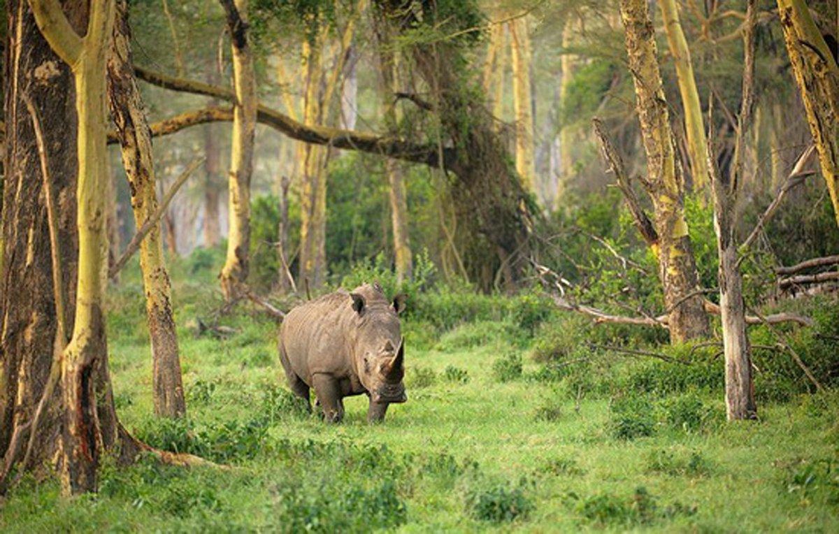 世界遺産・ウジュンクロン国立公園に行く旅1泊2日