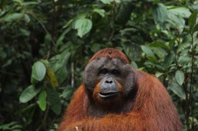 A Male in Pondok Tanggui