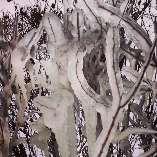 Branches in ice