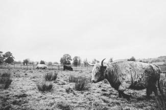 Ashes Barns Endon wedding photography-142
