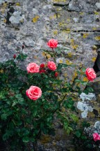 Manobier Castle wedding Photography-14