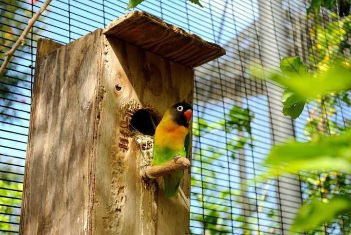 Sarang Burung Lovebird