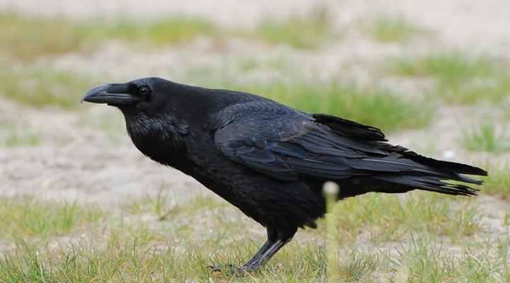 Daftar Jenis-Jenis Burung yang Penuh Mitos, Tertarik Memeliharanya?
