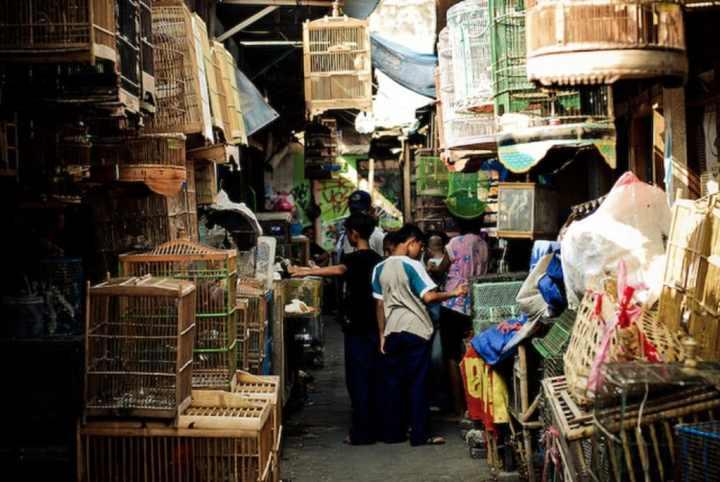 Pasar Burung Kicau PASTY - wisatania.com
