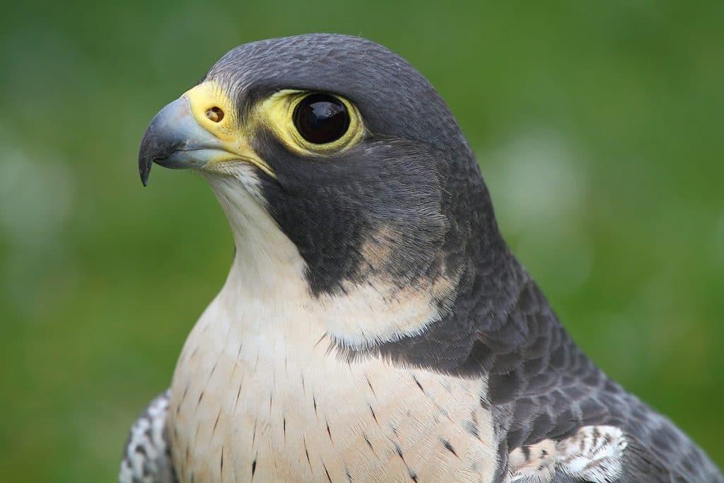 Source - aves-identificacion