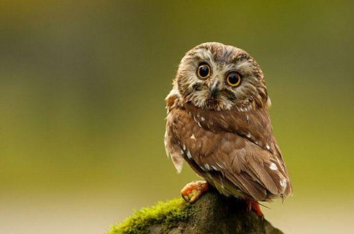 Burung Penyendiri