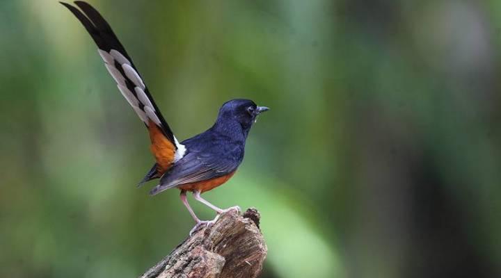 Jenis Burung Peliharaan Untuk Pemula