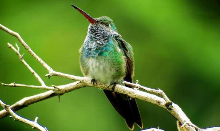 Emerald Honduras