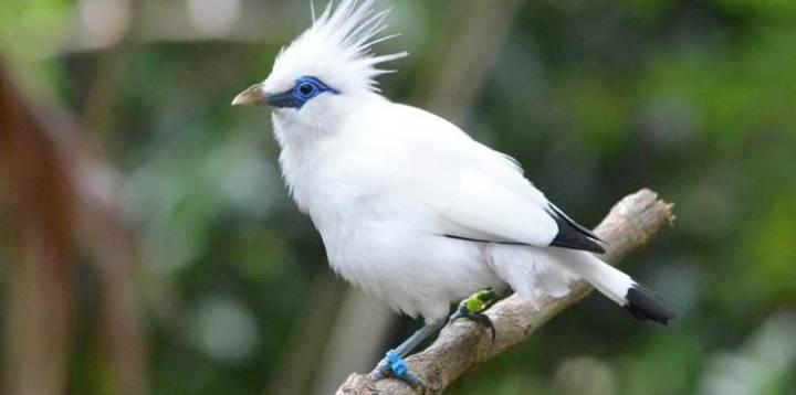 Indonesia sebagai negara kepulauan dengan bentang alam yang menawan merupakan habitat berb Empat Burung Langka, Unik Dan Indah Asli Nusantara
