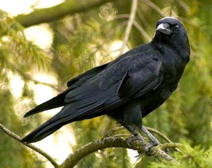 masyarakat Indonesia masih sangat erat dan percaya dengan mitos Daftar Jenis-Jenis Burung yang Penuh Mitos, Tertarik Memeliharanya?