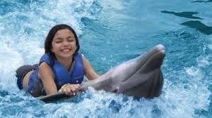 Dolphin Interaction Ocho rios Jamaica