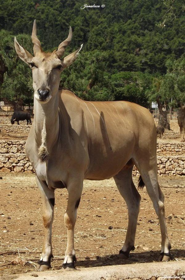 Zoosafari di Fasano