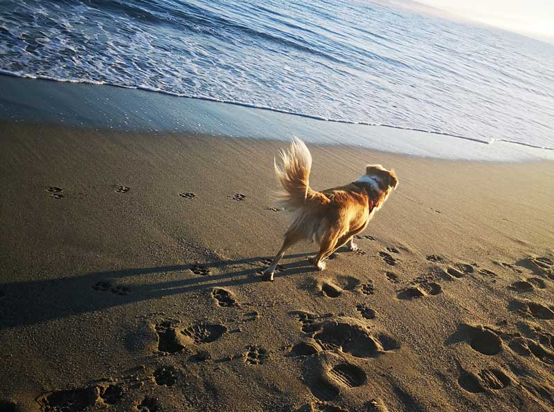 Spiagge per cani in Calabria