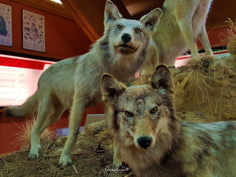 Centro visite Cupone Museo Naturalistico