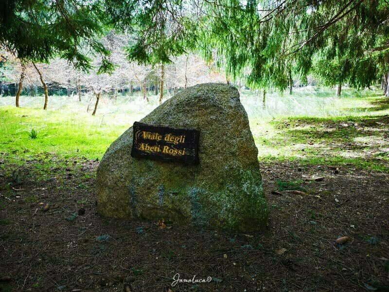 Arboreto del Parco Sila Grande
