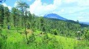 Bukit Grenden di Magelang. (Instagram/@buddi_tama)