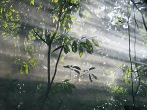 IMG 09 Sunlight Through The Canopy 2web