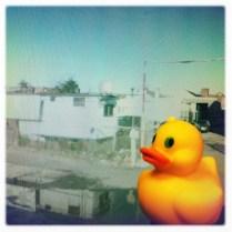 That water's kinda yucky, Ducky!