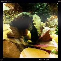 The Yoga-ing Yard Gnome!