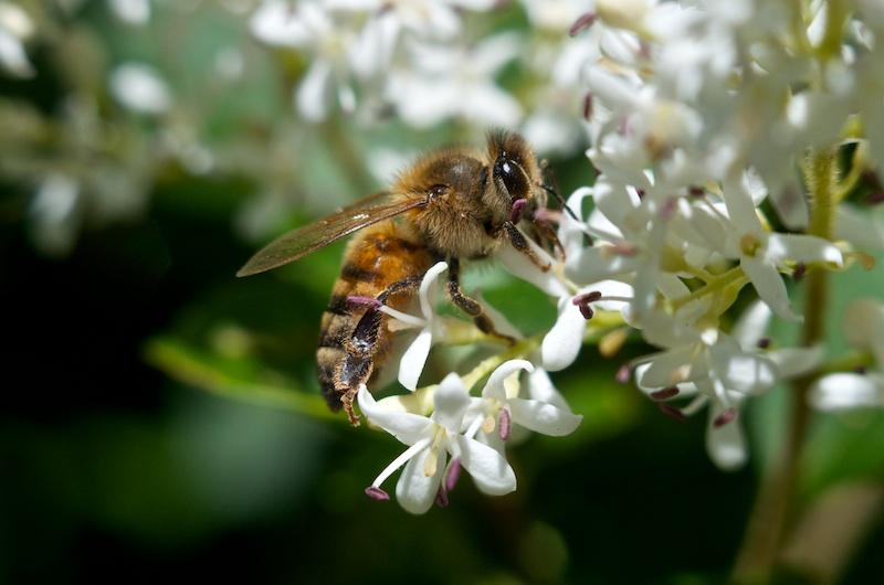 365.112 Zomb-E Bee
