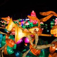 Chinese Lantern Festival151 march of the gleeful ants©JamesECockroft 20130104
